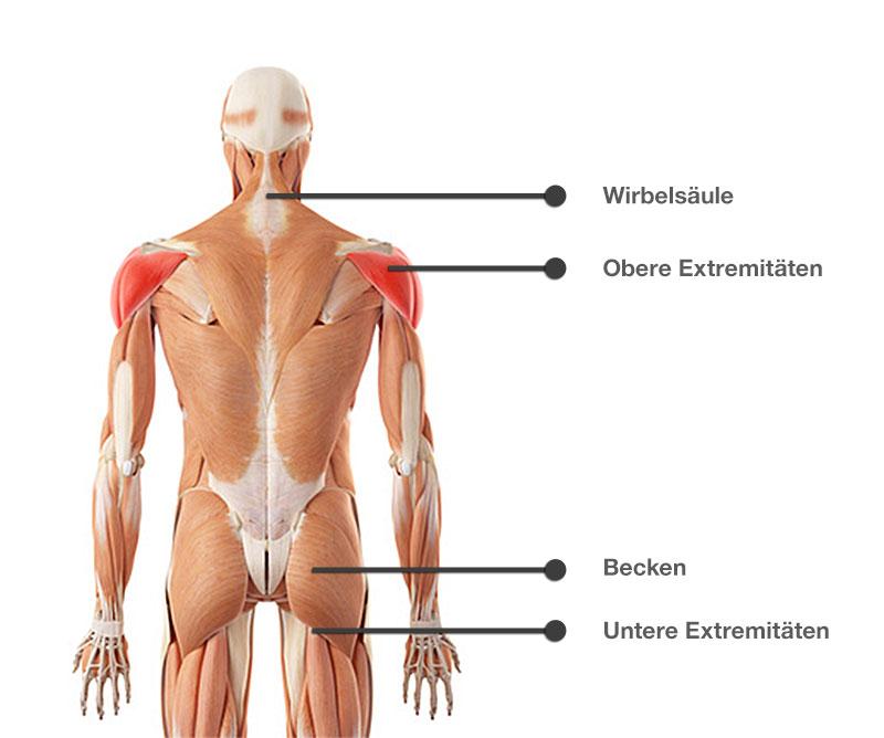 Anatomische Ansicht